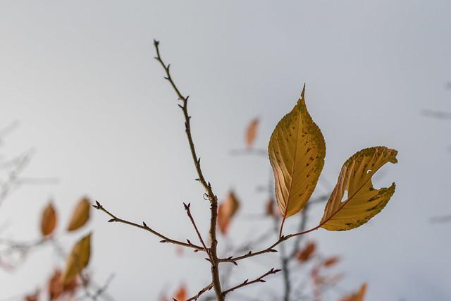 Autumn Leaves, Kyiv