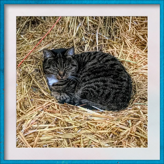cat at the stable