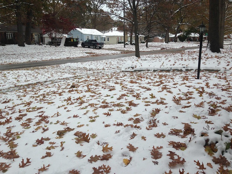 neighbor's front yard - leaf-covered snow cover