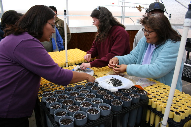 Moencopi Day School teachers sowing yucca seeds