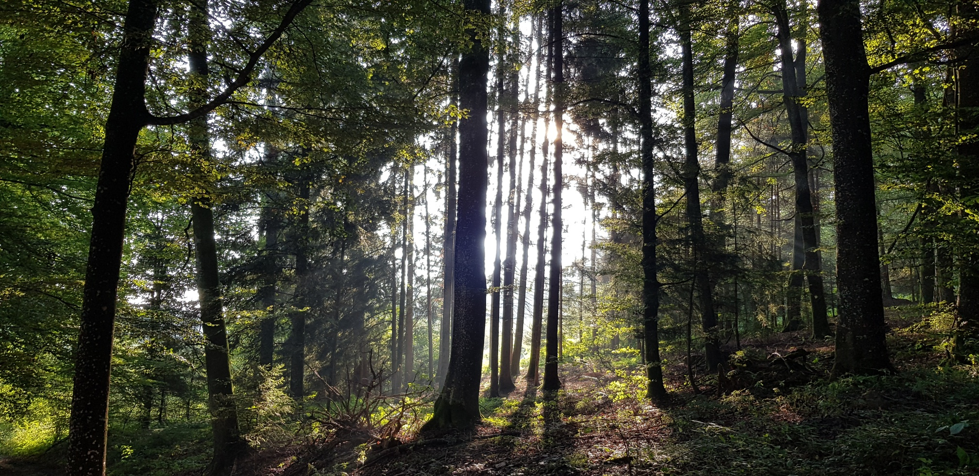 Fremde Wälder