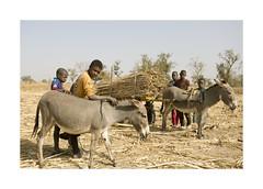 Gambia - Children