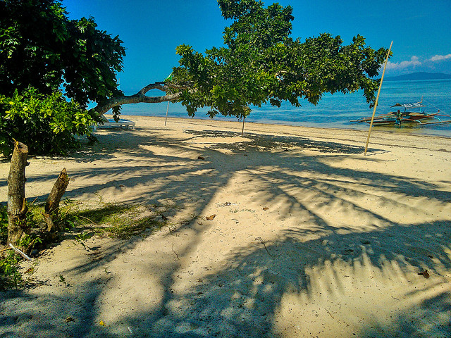 Coconut trees shadows on the sands in a tropical beach.