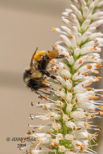Pollen Gathering 1