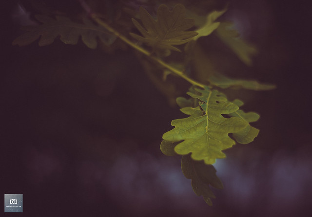 Just a leaf.......earlier this year in Spring