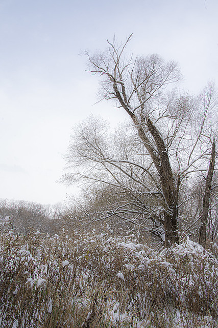 A wintry day in Minnesota