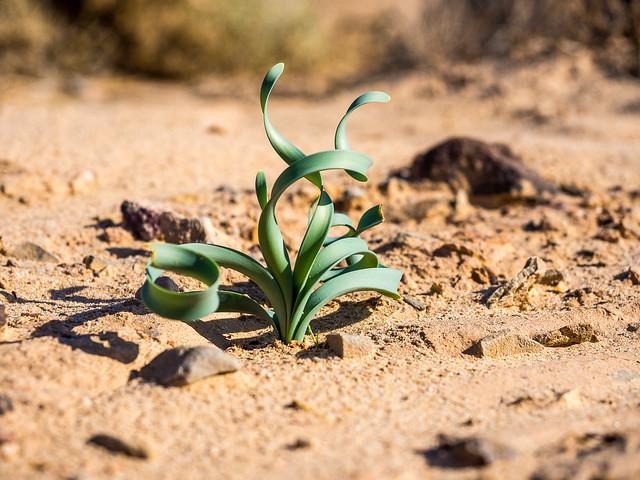 Desert green