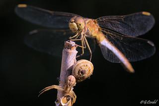 Libellule, escargot et araignée