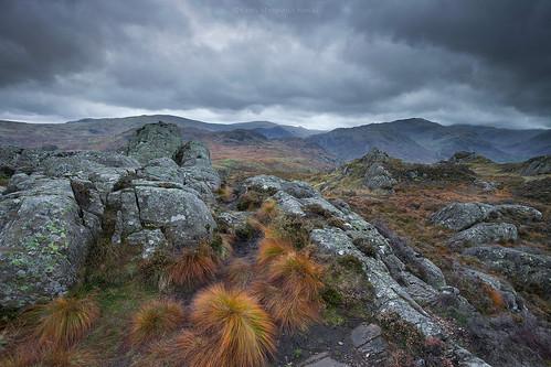 Mountain Grasses - N O R T H   L A K E S