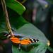 """<p><a href=""""https://www.flickr.com/people/bretttbinns/"""">Brett of Binnshire</a> posted a photo:</p>  <p><a href=""""https://www.flickr.com/photos/bretttbinns/49092043041/"""" title=""""Butterfly House""""><img src=""""https://live.staticflickr.com/65535/49092043041_63032c70be_m.jpg"""" width=""""240"""" height=""""240"""" alt=""""Butterfly House"""" /></a></p>  <p>Zoo Antwerpen, Antwerp, Belgium</p>"""