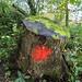 "<p><a href=""https://www.flickr.com/people/spannarama/"">Spannarama</a> posted a photo:</p>  <p><a href=""https://www.flickr.com/photos/spannarama/49092105432/"" title=""Dovedale walk""><img src=""https://live.staticflickr.com/65535/49092105432_567ba20ec5_m.jpg"" width=""240"" height=""160"" alt=""Dovedale walk"" /></a></p>"