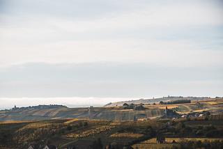 Alsatian panorama