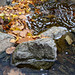 "<p><a href=""https://www.flickr.com/people/jjbphotography/"">John J Buckley</a> posted a photo:</p>  <p><a href=""https://www.flickr.com/photos/jjbphotography/49092315936/"" title=""Autumn Stream""><img src=""https://live.staticflickr.com/65535/49092315936_ae3eb98601_m.jpg"" width=""172"" height=""240"" alt=""Autumn Stream"" /></a></p>"