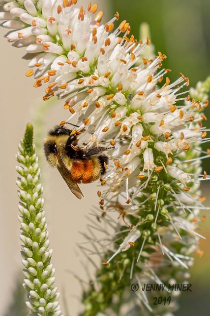 Pollen Gathering 2
