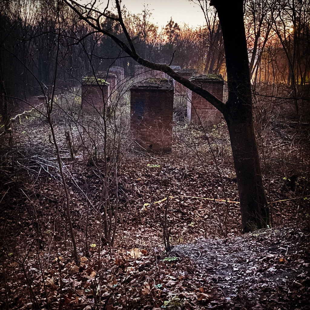 Blair Witch time of sunrise 👣 #blair #witch #blairwitch #sunrise #Kaunas #Lietuva #Lithuania #forest