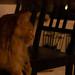 "<p><a href=""https://www.flickr.com/people/flameeyes/"">Flameeyes</a> posted a photo:</p>  <p><a href=""https://www.flickr.com/photos/flameeyes/49092392411/"" title=""20191115-Sony-ILCE-7-1789.jpg""><img src=""https://live.staticflickr.com/65535/49092392411_d3d64e7b12_m.jpg"" width=""240"" height=""192"" alt=""20191115-Sony-ILCE-7-1789.jpg"" /></a></p>  <p>#budapest #catcafe</p>"