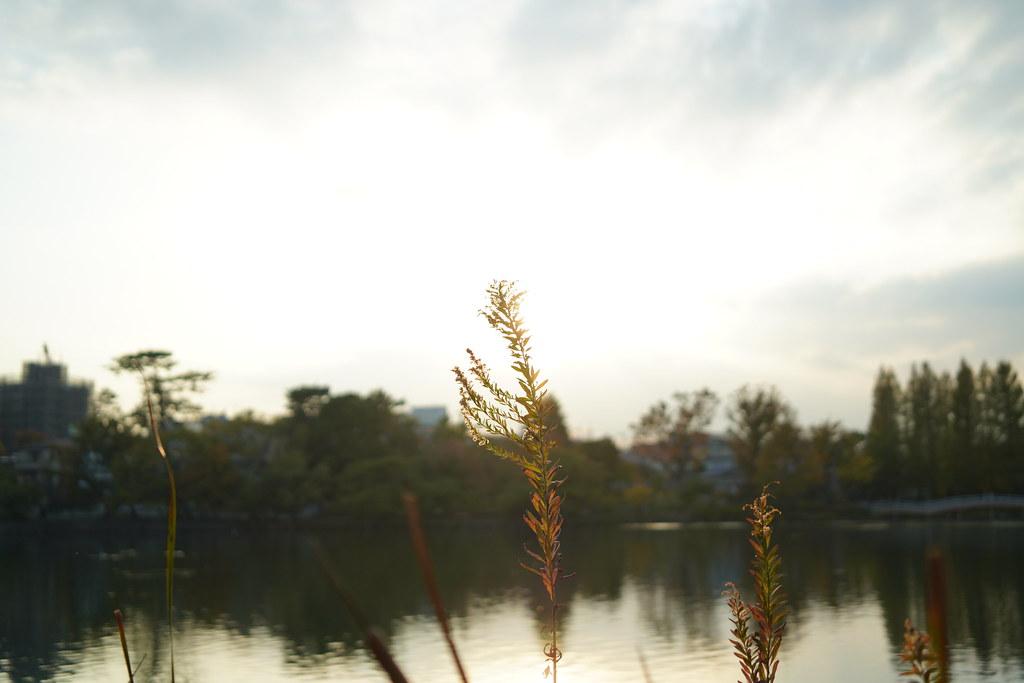Senzokuike Sunset