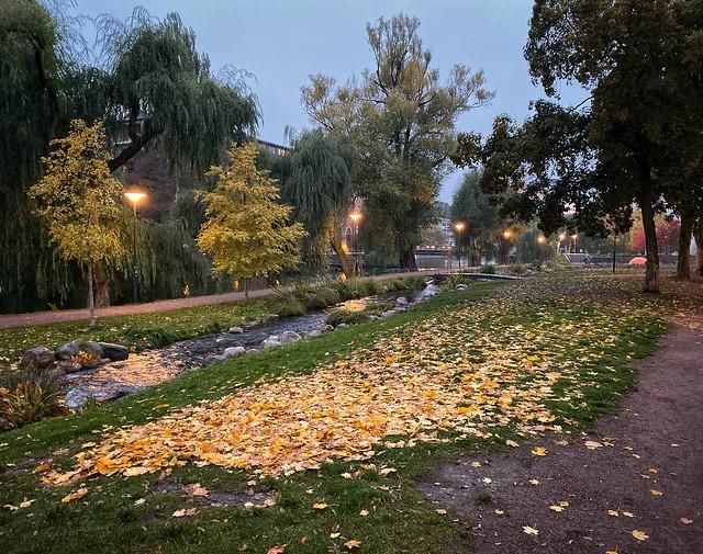 Parkland in twilight