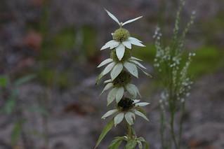 Weird Flower