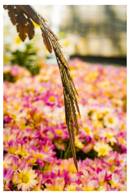 Blade Wing - Bellagio Gardens - Las Vegas NV_Web 1_Scaled