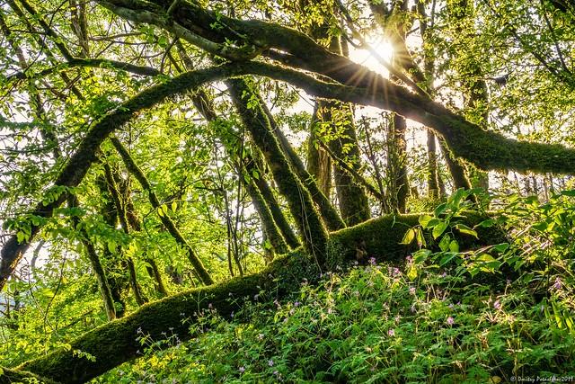 Sun through trees overgrown with moss in dense rainforest