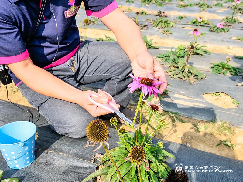 flower-tea-62