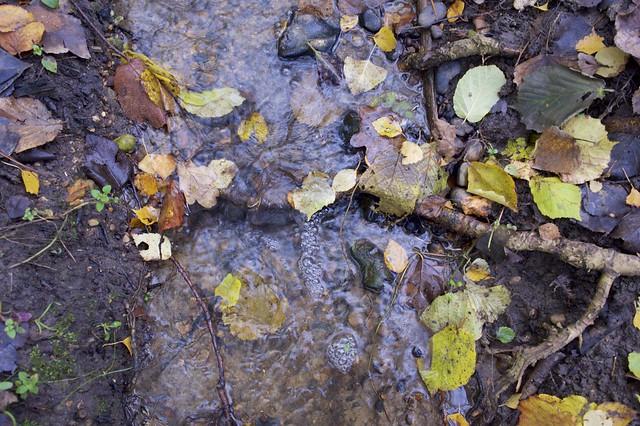 Stream running through Bishop's Wood