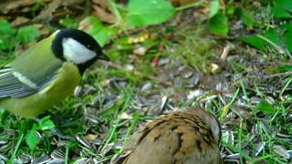 Aialinnud / Garden birds