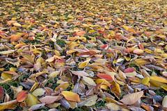 Leaves Autumn 2
