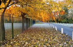 Autumn Ivy Lane