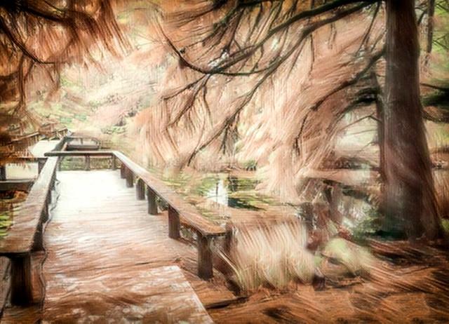 Autumn Bridge- iPhone & apps, Vancouver.
