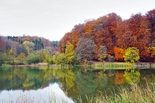 Herbstwald am See
