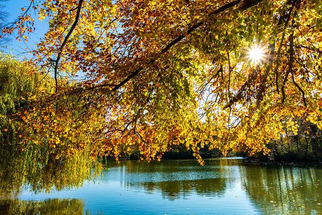 Shining Foliage