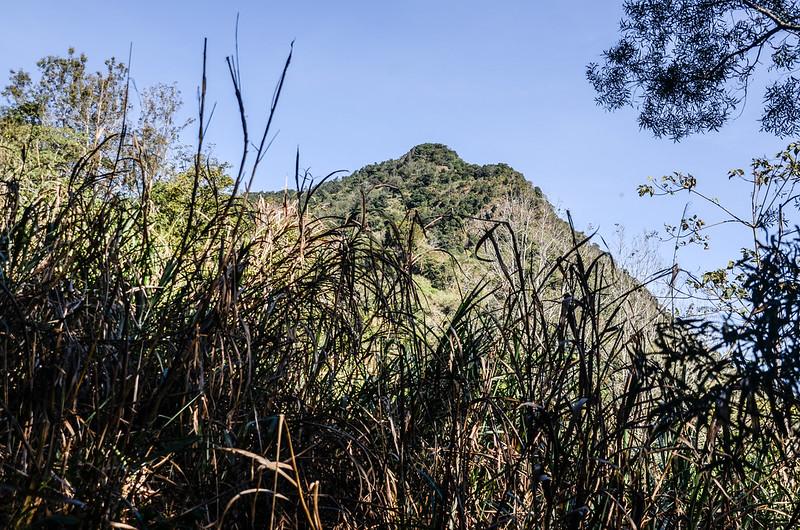 西良母嵐山稜線(H 1335 m)東北望西良母嵐山