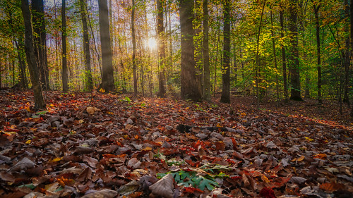 sonyalpha autumn fall foliage forest green hiking landscape landscapephotography leaves madewithluminar maryland nature park skylum sonyimages sun sunlight sunrays trees crownsville unitedstatesofamerica