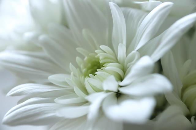White beauty / Fehér szépség