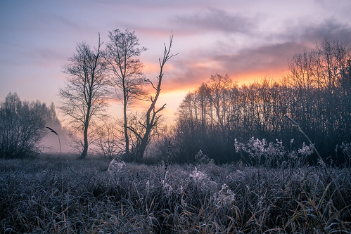 landscape nature poland mazovia flora trees meadow frost hoarfrost cold autumn morning sunrise dawn clouds outdoors