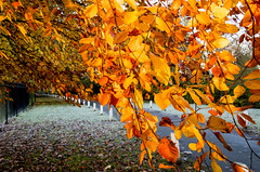 Autumn Ivy Lane 2