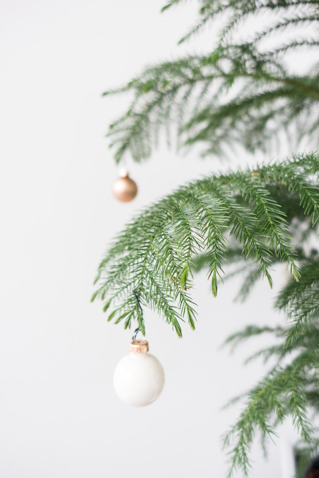 A Zero Waste Christmas