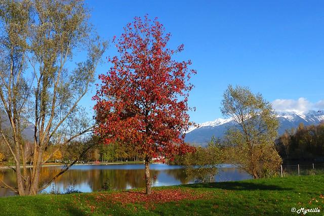 L'arbre rouge au bord du lac de Carouge.