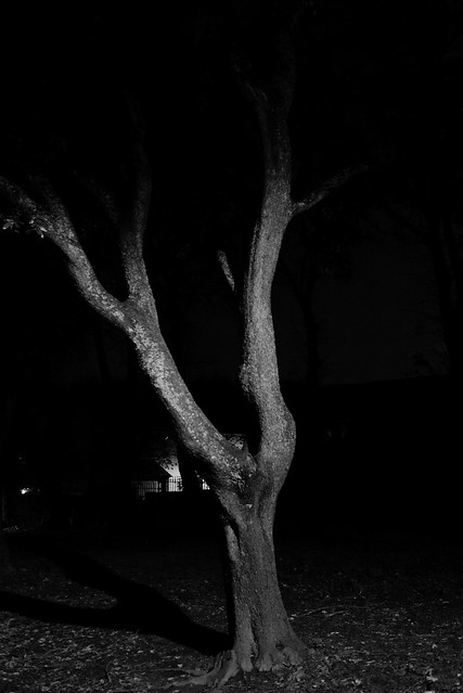 Haunted Frightened Tree (Bob Dylan)