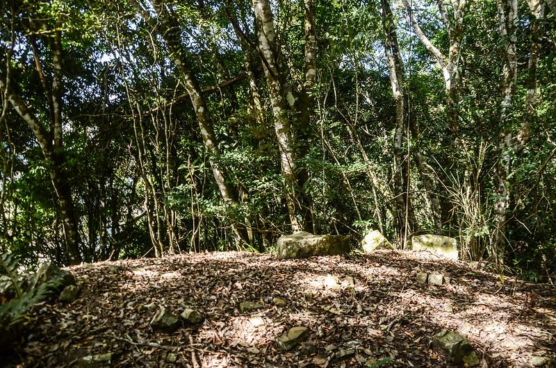 西良母嵐山1617假山頭