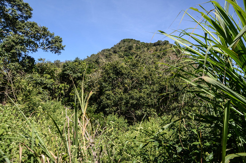 西良母嵐山稜線(H 1440 m)北望西良母嵐山
