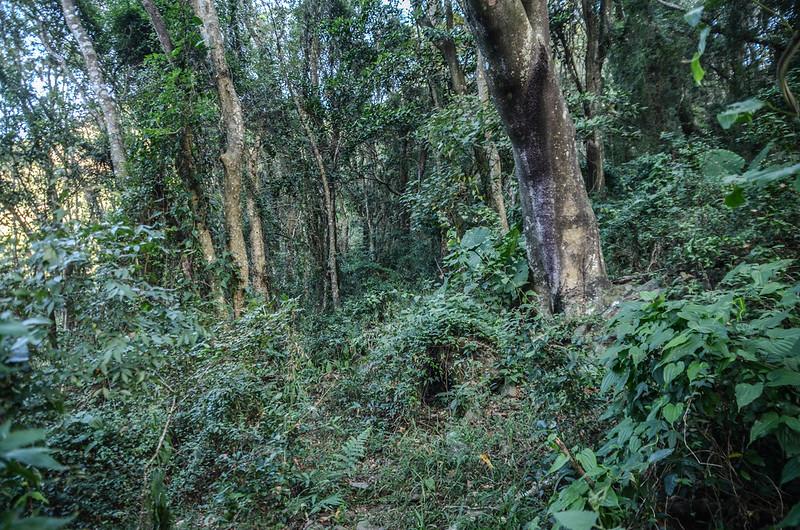 西良母嵐山登山獸徑