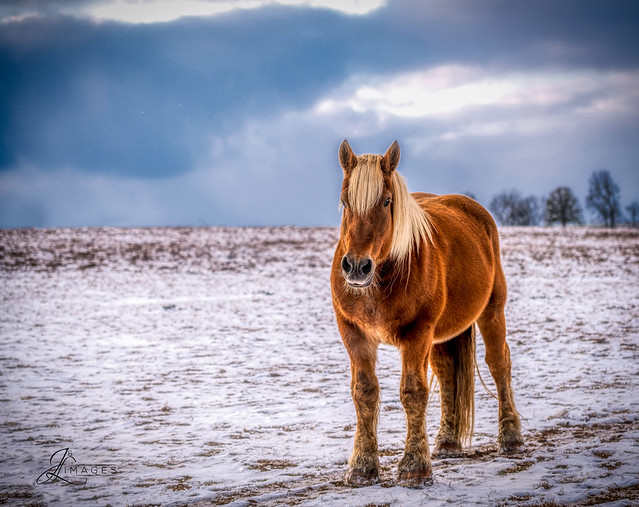 Horse on a snowy day