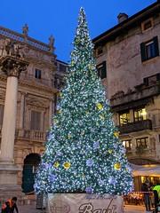 Verona's Christmas Tree