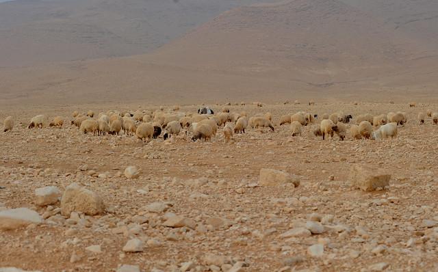 Palmyra, Syria, 401