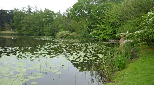 Le lac, jardin botanique (Botanisk have), Indre by, Copenhague, Danemark.