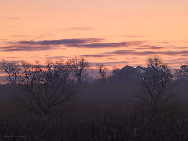 Pre-Dawn; Fixed Focus...