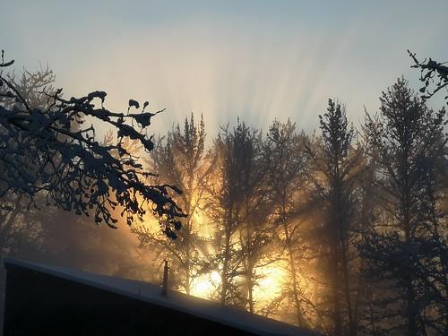 crepuscular snow winter fishcreekpark calgary yyc sicomelake fog